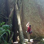 peru_amazon_jungle_buttress_roots_of_tall_tree
